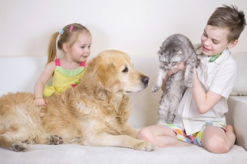 Boy, Girl, Cat And Dog Playing In Living Room